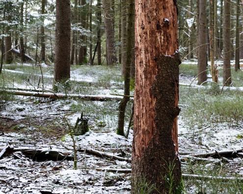 Dem Wald geht's richtig dreckig